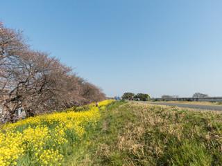 桜の名所「熊谷桜堤」