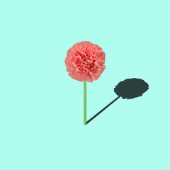 carnation flower on bright background, minimalist art