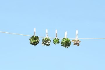 Plants pegged on a clothes line, against a blue background
