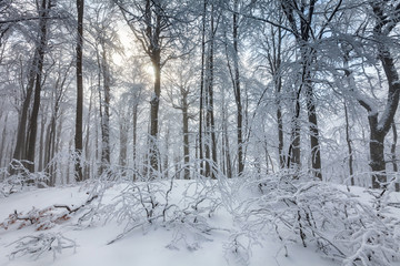 White forest covered in snow