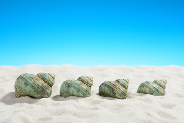 Turquoise snail shells on the white sand beach