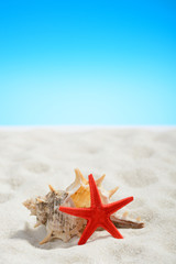 Red starfish on the beach on background of blue sky