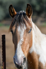 Head horse portrait