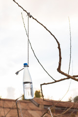 Bottle hanging from a tree