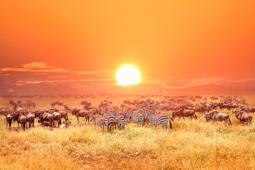 Zebras and antelopes in africa national park. Sunset. Wall mural