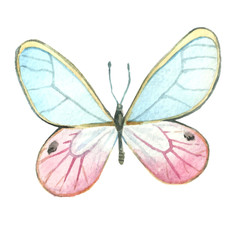 The butterfly with pink and blue wings is painted with watercolor. Illustration of watercolor.
