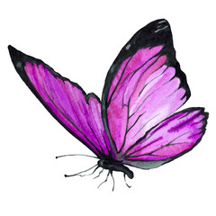 Butterfly purple watercolor. Illustration. Handmade.