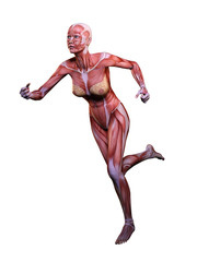 Muscle woman anatomy in motion 3D Illustration