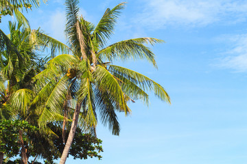 Tropical landscape with palm tree. Exotic island photo background.