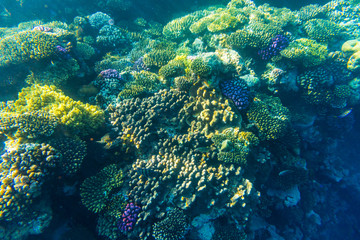 Foto op Aluminium Onder water sea coral reef with hard corals, fishes underwater photo