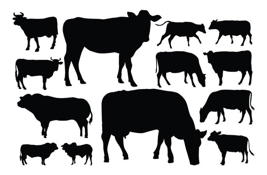 Male and female cow silhouette set colection