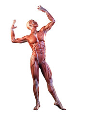 Muscle man anatomy in motion 3D Illustration