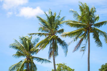 Tropical landscape with palm trees. Palm leaves on sky background.