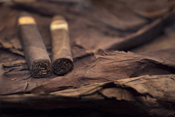 group of cigars on tobacco leaves