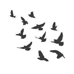 Silhouette flying birds on white background. Pigeons fly.