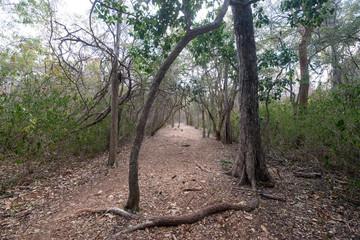 Mayan archaeological site, zona arqueologica Sayil, Yucatan, Mexico