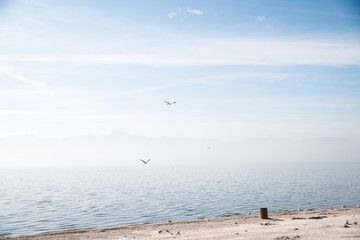 Serene beach landscape at dawn. Salton sea landscape at peace, uninterrupted without people. Birds flying.