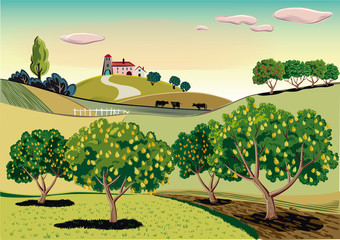agricultural landscape, with pear tree.