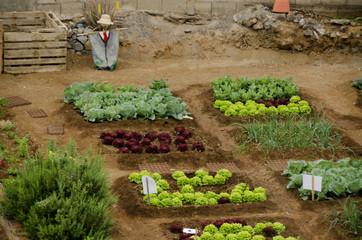 Urban Garden with a Scarecrow