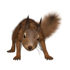 3D Rendering European Red Squirrel on White