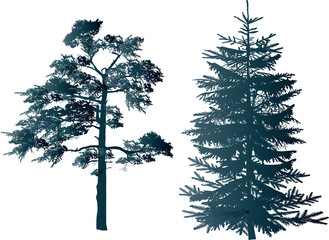 dark blue pine and fir silhouettes on white