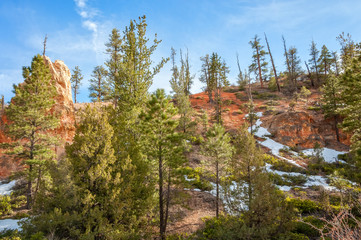 Sunlit trees at Bryce Canyon national Park