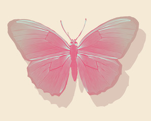 graphic pink butterfly on a wall