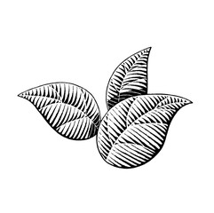 Vectorized Ink Sketch of Leaves