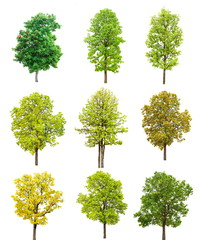 The collection of trees set isolated on white background