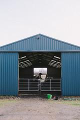 Group of horses running in barn