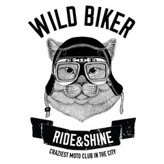 Vintage images of Cat for t-shirt design for motorcycle, bike, motorbike, scooter club, aero club