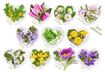 Alternativmedizin mit Heilpflanzen 4