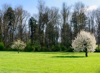 Baum auf der grünen Wise,Feld