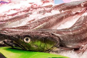 Fresh hake on ice sold at Spanish market