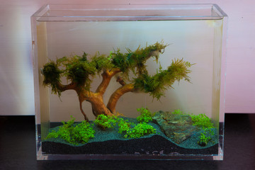 Aquascaping freshwater acrylic aquarium neon fish