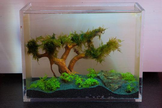 Aquascaping freshwater acrylic aquarium neon fish