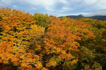 Fall Foliage Lafayette Brook Mt Lafayette Franconia Notch White Mountain National Forest New Hamshire USA