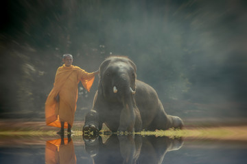 Monk And Elephant  sitting and standing  on the park Surin Thailand.