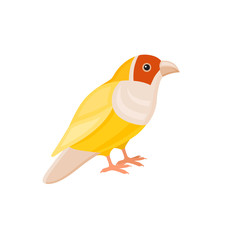 Bird with colorful feathers, isolated vector illustration