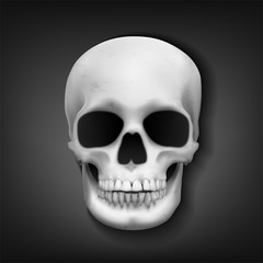 Realistic skull head on dark background, Vector Illustration