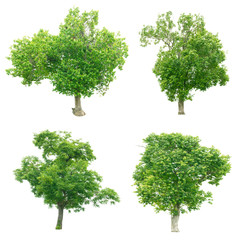 Group of trees on white background.