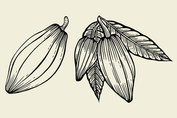 Cacao tree leaves