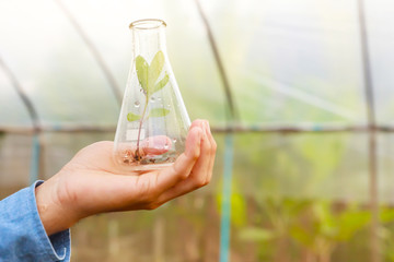 Man biologist pouring liquid from test tube in greenhouse. Agriculture concept.