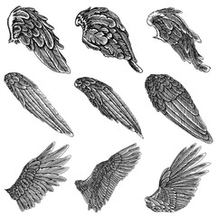 Hand drawn illustration of bird wings. Card, poster, t-shirt, smart phone, CD print design. Vector set.
