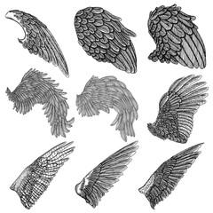 Hand drawn illustration of bird wings. Card, poster, t-shirt, smart phone, CD print design. Vector set.
