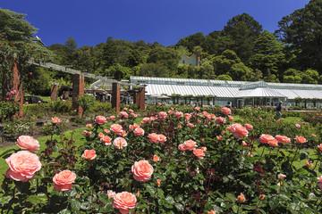 The Lady Norwood Rose Garden