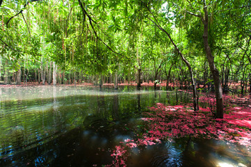 Beautiful autumn landscape with lake in national park of Thailand