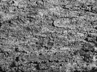 Canvas Prints Roe bark texture