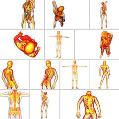 3d rendering medical illustration of the skeleton bone