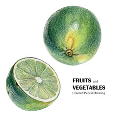 Illustration with green lime drawn by hand with colored pencil. Drawing with crayons. Fresh tasty fruits painted from nature